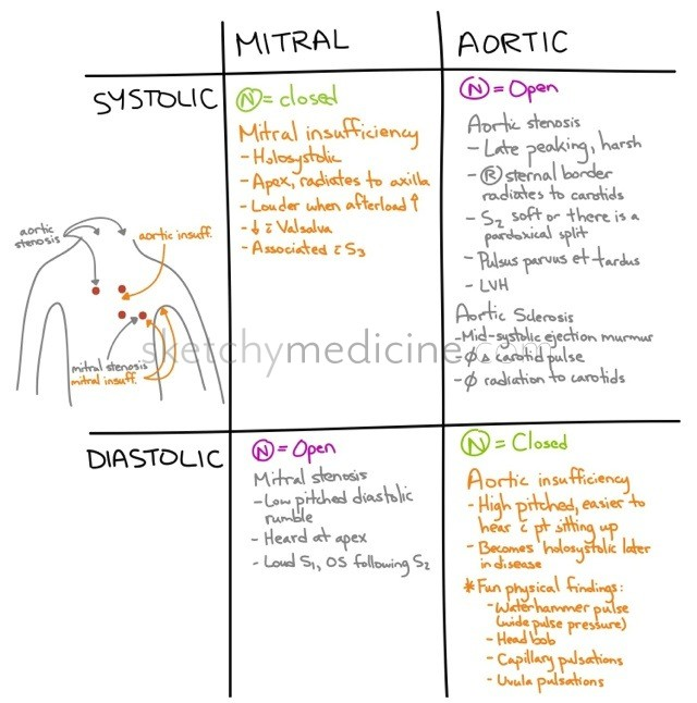 The Differences Between Mitral