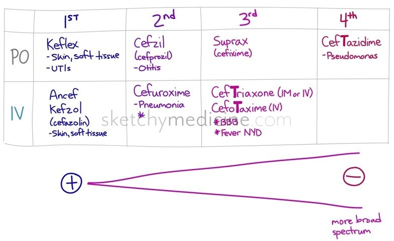 cephalosporin and penicillin relationship questions
