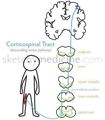 corticospinal_tract