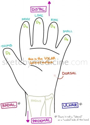 hand-descriptions