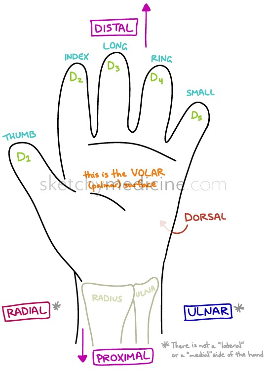 Describing where things are on the hand | Sketchy Medicine